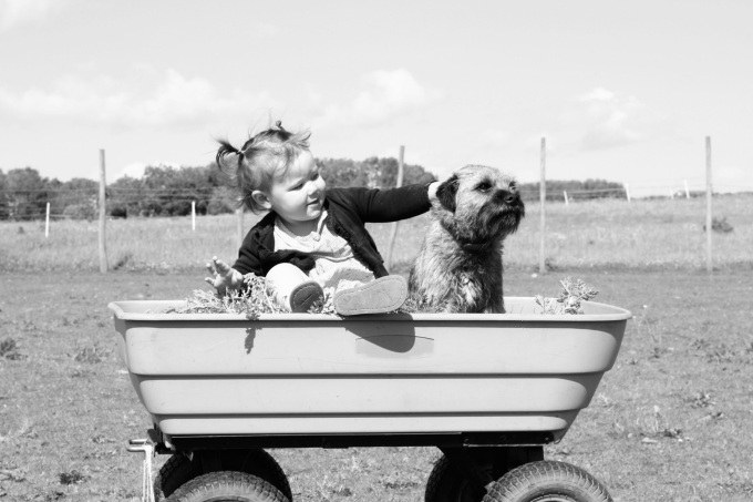 Child and dog in kids wagon